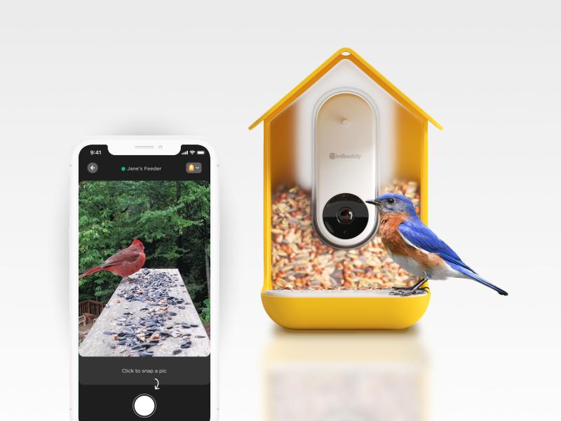 Bird Buddy - featured - image